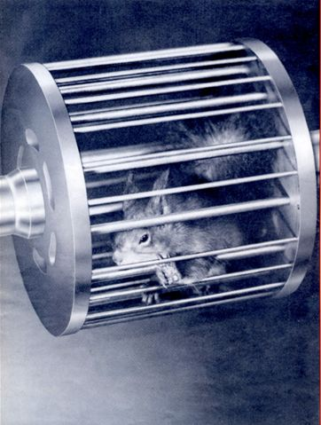 Squirrel cage motor-squirrel eekhoorn